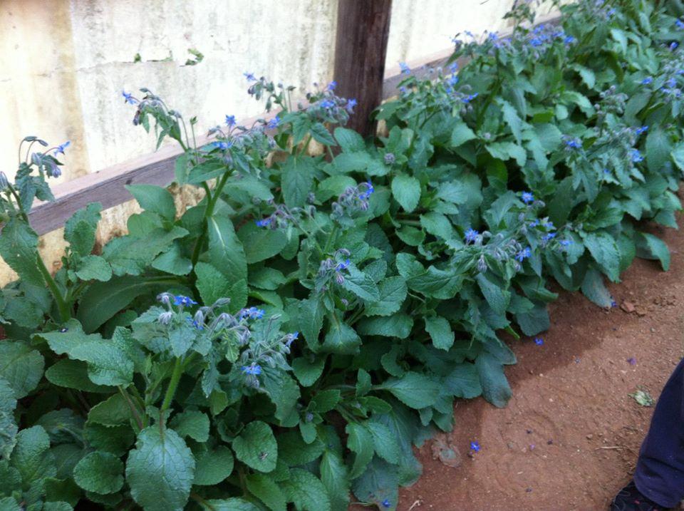 Fetaosona Mas el Jalech BorraÏnes florides