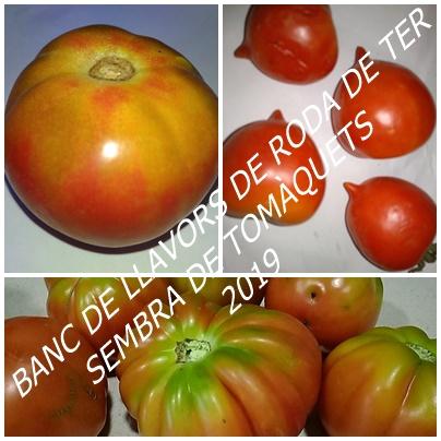 banc de llavors sembra tomaquets
