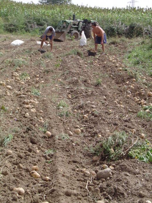 fetaosona associació de productors patata del bufet