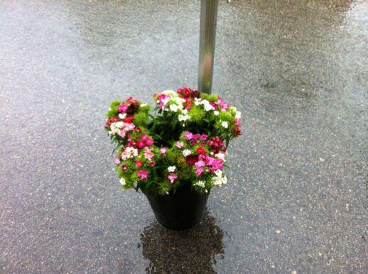 Fetaosona Mas el Jalech Flors de cultiu ecològic