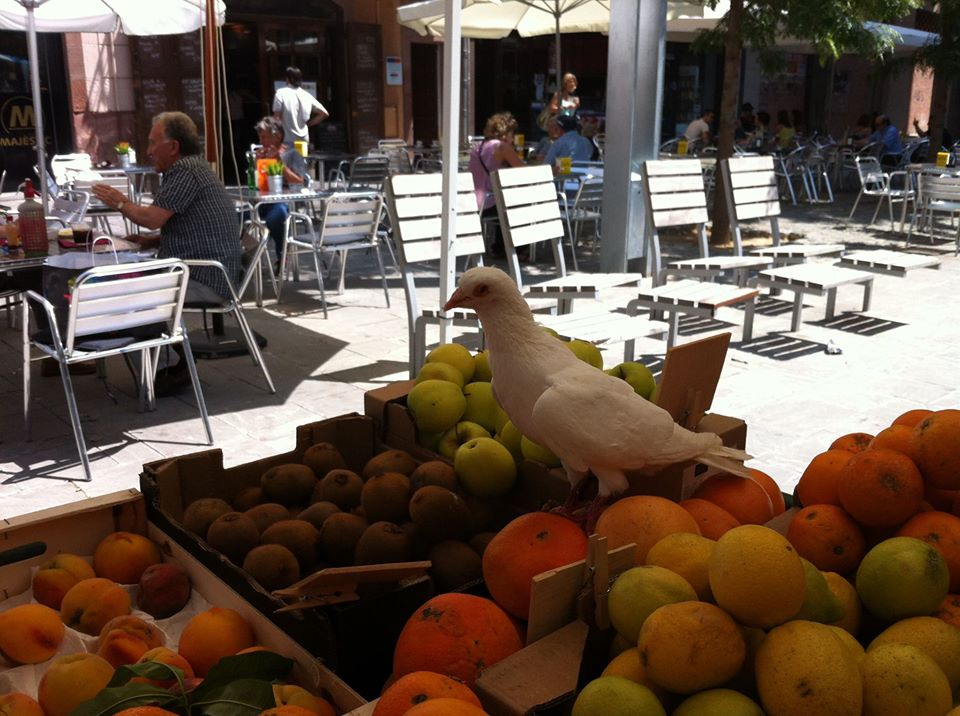 Fetaosona Mas Jalech mercat