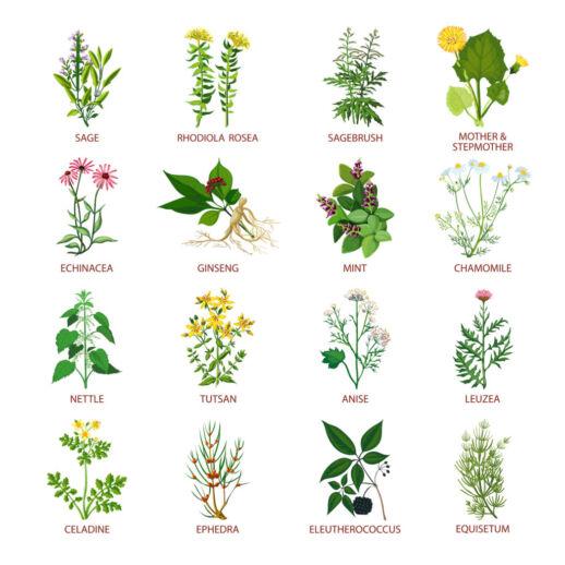 Fetaosona - Herbolari de Sau - Medicinal Herbs Icons Flat